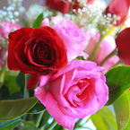 rose, red roses, pink rose, rose bouquet, Valentine's Day, flower vase, seasonal picture, holidays celebration, free stock photo, free picture, stock photography, royalty-free image