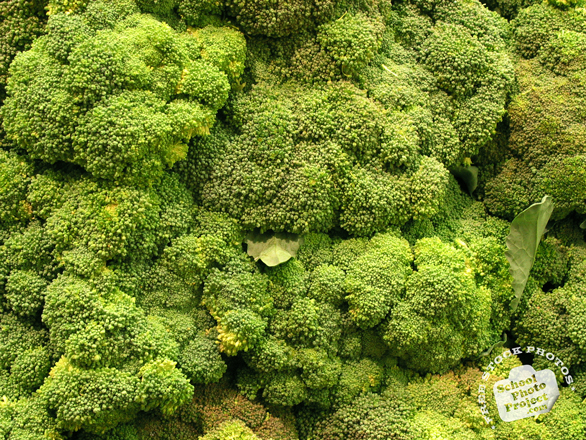 broccoli, vegetable, fresh veggie, vegetable photo, free stock photo, free picture, stock photography, royalty-free image