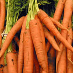 carrot, vegetable, fresh veggie, vegetable photo, free stock photo, free picture, stock photography, royalty-free image