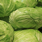 flat cabbage, vegetable photos, veggie, free stock photo, royalty-free image