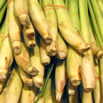 lemongrass, vegetable, fresh veggie, vegetable photo, free stock photo, free picture, stock photography, royalty-free image