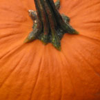 pumpkin, gourd, vegetable picture, free stock photo, royalty-free image