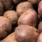 purple majesty potato, vegetable photos, veggie, free stock photo, royalty-free image