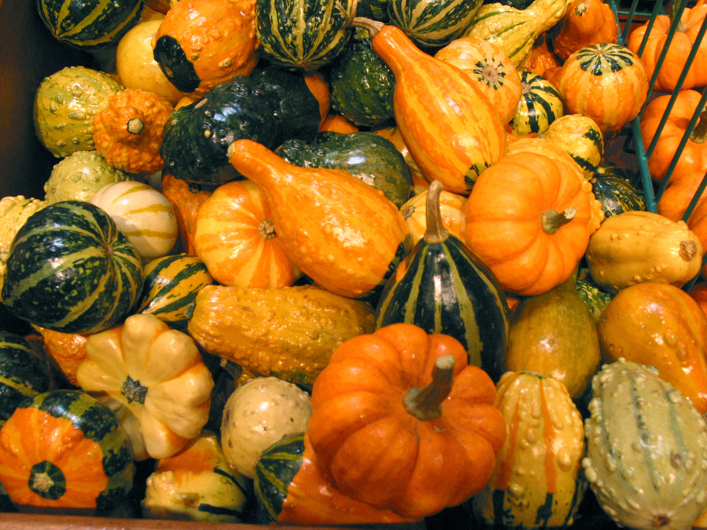 Squash Free Stock Photo Image Picture Squash Varieties