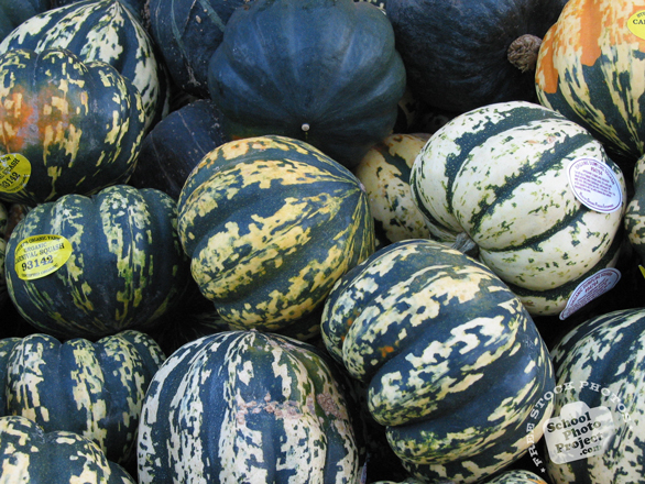 squash, squash photo, gourd, vegetable, fresh veggie, vegetable photo, free stock photo, free picture, stock photography, royalty-free image