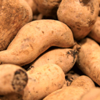 yam, tuber, vegetable photos, veggie, free stock photo, royalty-free image